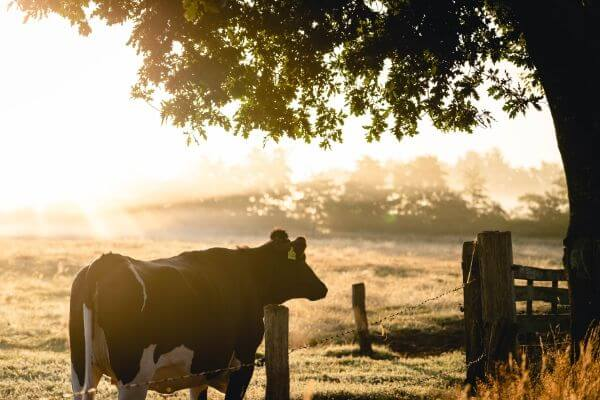 Farm-Insurance-Broker-Australia